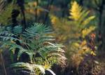 Ліс у Гаях
