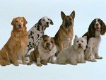 Собаки у Дрогобичі
